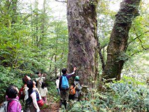 Wälder der Welt: Japan